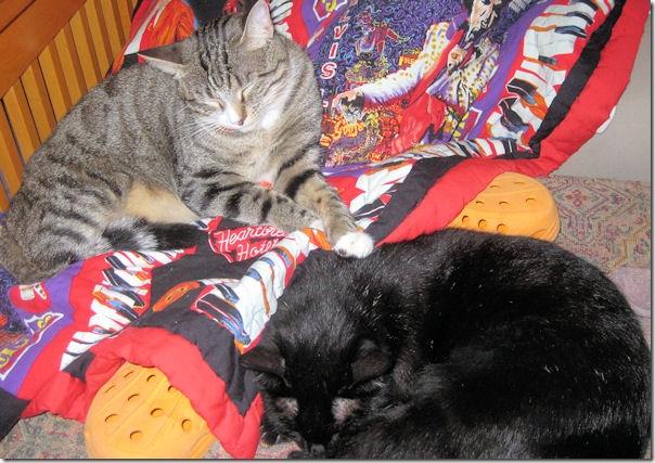 loving kitties