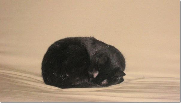 sleeping starbuck