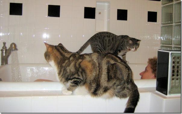 robin's first bath 2