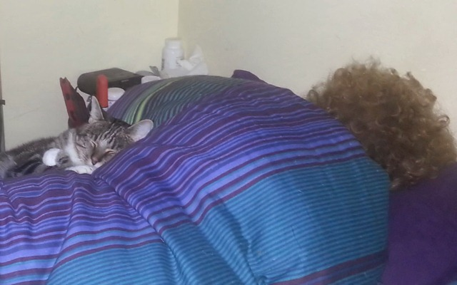 boomer and robin sleeping
