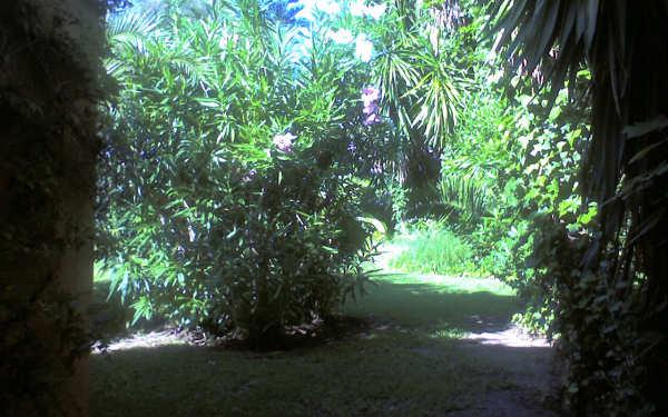 Patio_view_albero